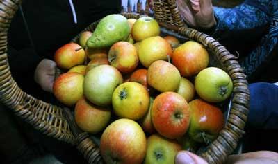 Auch in diesem Jahr wird wieder reichlich Apfelsaft selbst gepresst. Archivfoto: JW.