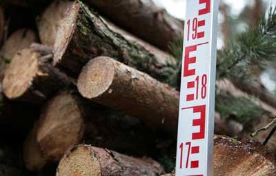 Ein Großteil der heimischen Nadelbäume soll akut bedroht sein. Foto: IG BAU