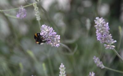 Streuobstwiesen sind Lebensraum für viele Tier- und Pflanzenarten. Foto: JW.