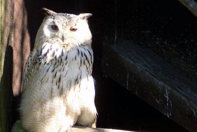 Am Freitagabend können die Eulen um Lauerholz beobachtet werden. Foto: Museum für Natur und Umwelt