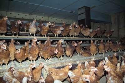 Die Lebensmittelproduktion verursacht mehr als ein Drittel der weltweiten Treibhausgase. Symbolbild: JW.