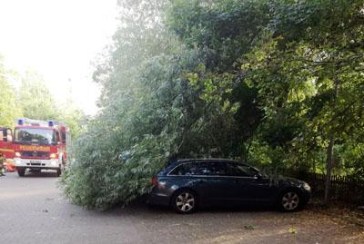 Auf einem Parkplatz in der Straße Am Behnckenhof stürzte ein Baum auf zwei Autos. Fotos: FH
