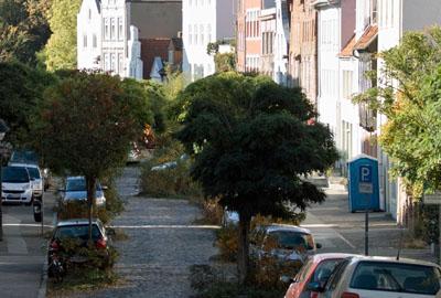 Nach zwei trockenen Sommern ist der Zustand der Lübecker Straßenbäume schlecht.