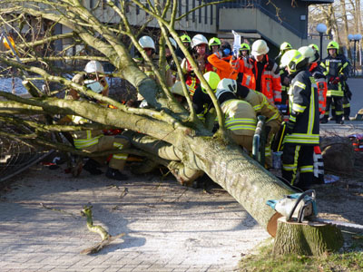 Zwei Arbeiter wurden unter dem Baum eingeklemmt. Fotos: Stefan Strehlau