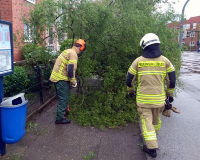 In der Ratzeburger Allee stürzte ein Baum um. Sonst gab es keine größeren Schäden in Lübeck. Fotos: Stefan Strehlau (2), Karl Erhard Vögele (4)