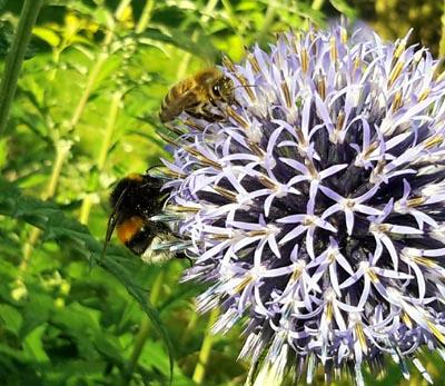 In diesem Jahr stehen die Bienen im Mittelpunkt des Festes.