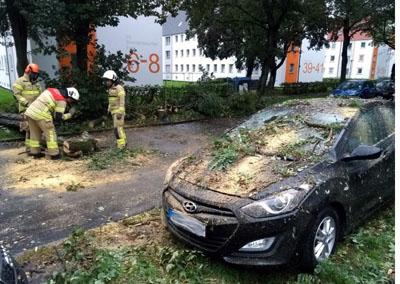In Brandenbaum stürzte ein Baum auf ein Auto. Fotos: Stefan Strehlau