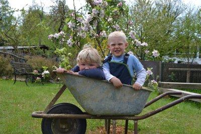 Im Rahmen ihres Sommerfestes lädt die Kita Janusz Korczak auch ins Kleingartengelände Hohewarte III. Besucher können dazu eine Bimmelbahn benutzen. Foto: Kitawerk