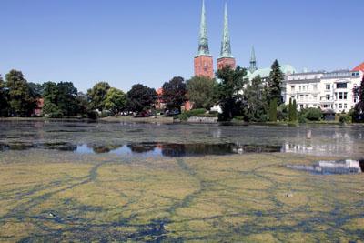 Den Algen auf dem Mühlenteich bekommt die Hitze sehr gut. Fotos: VG